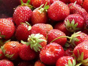 fraise de dordogne